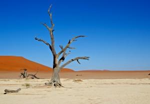 Dune 45 & Deadvlei, Sand Dunes & Salt Pans