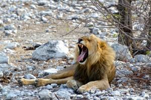 Game Drive: Etosha National Park